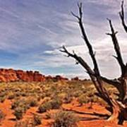 Bald Tree At Arches  Poster