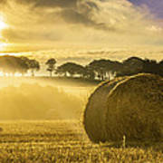 Bales In The Morning Mist Poster