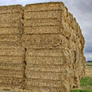Bales Of Hay On Farmland Poster