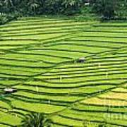Bali Indonesia Rice Fields Poster