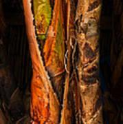 Balk Of Palm Tree Poster