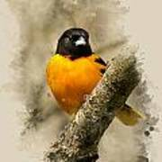 Baltimore Oriole Watercolor Art Poster