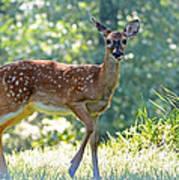 Bambi 2 Poster