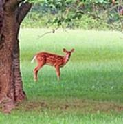 Bambi Days Poster