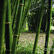 Bamboo Forest Poster by Andres LaBrada