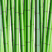 Bamboo Forest Background 2 Poster