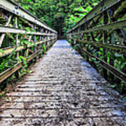 Bamboo Forest Bridge Poster