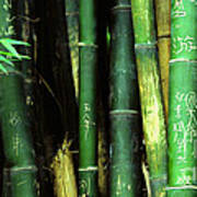 Bamboo Graffiti Pano - Sichuan Province Poster by Anna Lisa Yoder