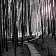 Bamboo Grove At Dusk Poster