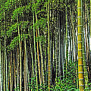 Bamboo Hill Poster