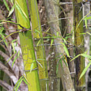 Bamboo I Poster Look Poster