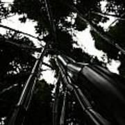Bamboo Skies 3 Poster