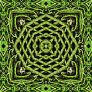 Bamboo Symmetry Poster