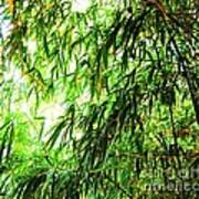 Bamboo Tree Poster
