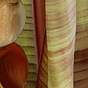 Banana Composition II Poster