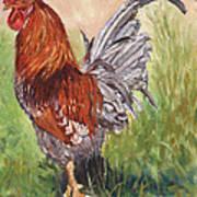 Bantam Cockerel Poster