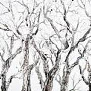 Bare Branches Print Option 2 Poster