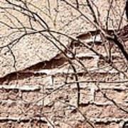 Bare Tree Adobe Wall Poster by Joe Kozlowski