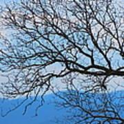 Bare Tree Against Blue Sky Poster