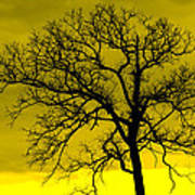 Bare Tree Against Yellow Background E88 Poster