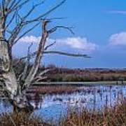 Bare Tree In Marsh Poster