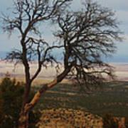 Bare Tree Poster