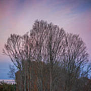 Bare Trees And Autumn Sky Poster