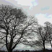 Bare Trees Winter Sky Poster