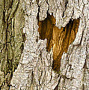 Bark Heart Poster