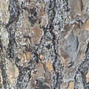 Bark Ix Poster