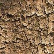 Bark Of A Tree Poster