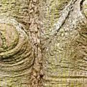 Bark Of Silk Floss Tree Background Texture Pattern Poster