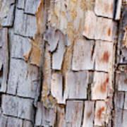 Bark On A Tree In The Desert In Sedona Poster