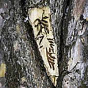 Bark Tattoo Poster