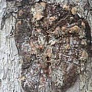 Bark Viii Poster