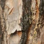 Bark X Poster