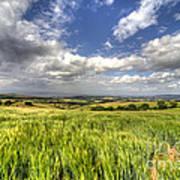 Barley View  Poster