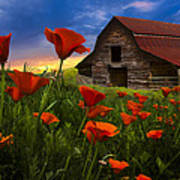 Barn In Poppies Poster by Debra and Dave Vanderlaan