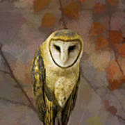 Barn Owl Poster