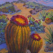 Barrel Cactus In Warm Light Poster