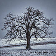 Barren Winter Scene With Tree Poster