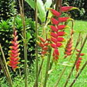 Barriles Flower Poster