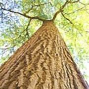 Bartrams Tree Poster