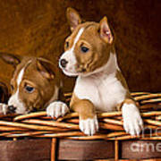 Basenji Puppies Poster by Marvin Blaine
