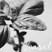 Basil Poster by Linda Woods