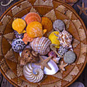 Basket Full Of Seashells Poster