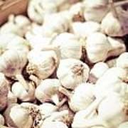 Basket Of Garlic Poster