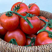 Basket Of Tomatoes  Poster