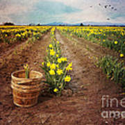 basket with Daffodils Poster