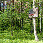 Basketball Forest Court Poster